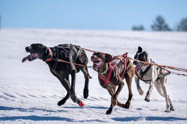 Zásadský sprint 2019